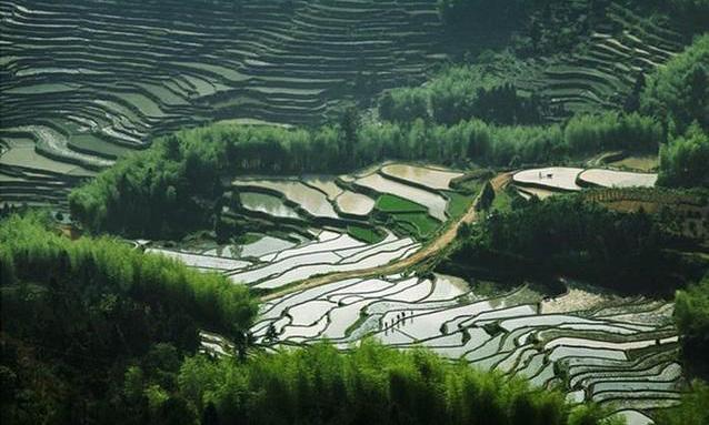 畲乡梯田的农耕美景