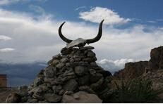 牦牛崇拜——藏族的原始崇拜(四)