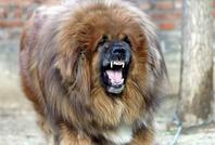 狗崇拜——藏族的原始崇拜(七)
